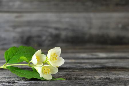 Jasmine on wooden background