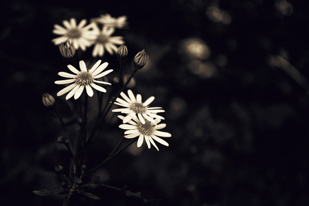 Flowers on dark background Imagens