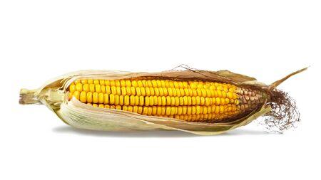 Corn isolated on white background