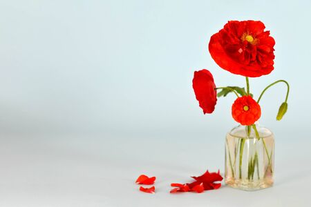 Red poppy flowers in vase on wooden background with copy space