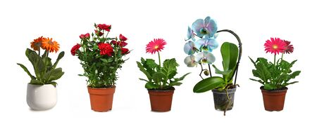 Flower plants in pots isolated on white background