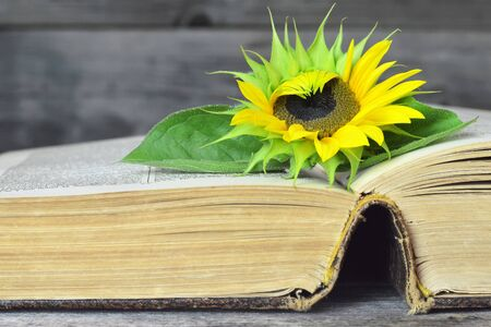 Open old book and sunflower