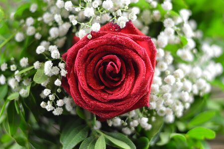 Close up of red rose in a wedding bouquet