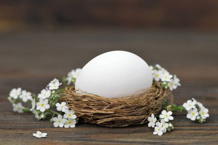 White Easter egg in nest and spring flowers