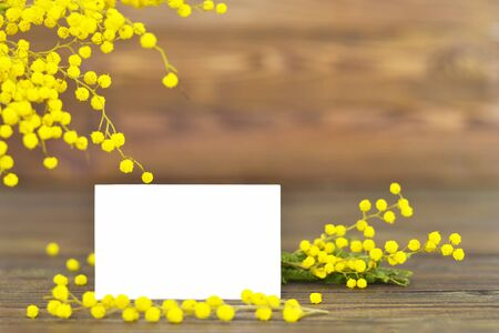 有含羞草花的妇女节卡片和拷贝空间