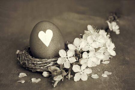 Easter egg in nest and white cherry blossom Banco de Imagens