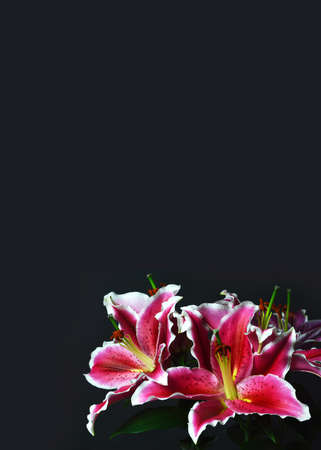Condolence card with lily flowers isolated on black background Stock Photo