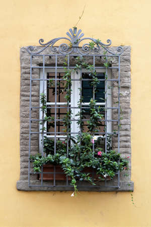 Vintage window with iron grate decorated with fresh Dipladenia (Mandevilla) flowers
