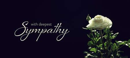 Sympathy card  white ranunculus flower on dark background