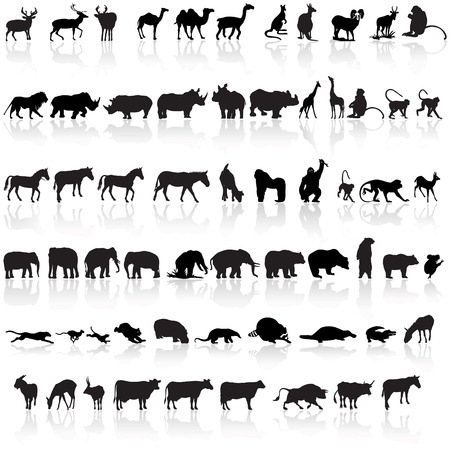 A set of Animal silhouettes with reflections  Vector
