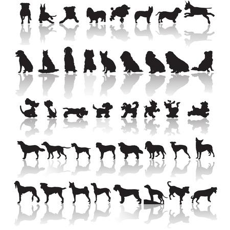 siluetas de animales: Cuarenta y uno siluetas de perros con una sombra