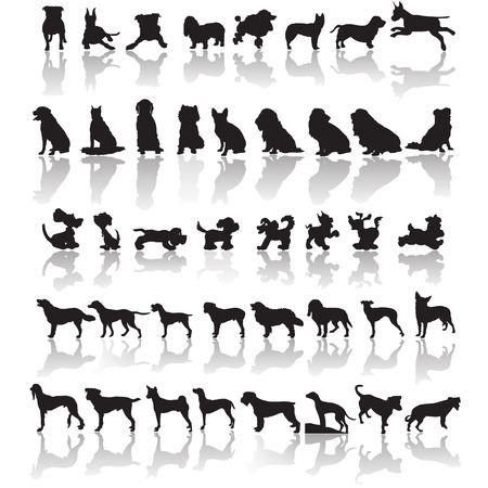 golden retriever puppy: Forty one dog silhouettes with a shadow