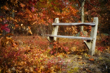 An empty park bench amidst trees and leaves in autumn. Stock Photo - 8598364
