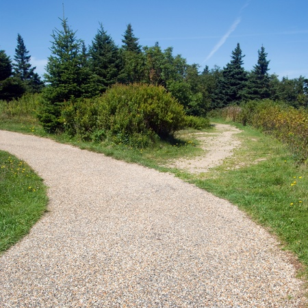 woodsy: A woodsy walkway in a forested area surrounded by trees.