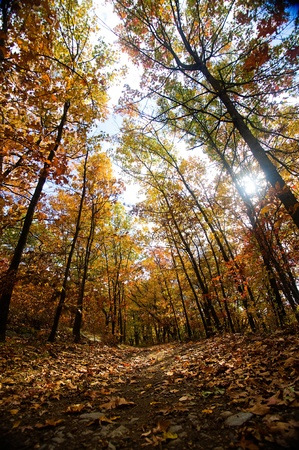 A forest trail in the fall with sunlight coming through colorful trees. Stock Photo