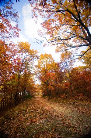 A forest trail in the fall with colorful trees. Stock Photo - 8666850