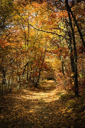 A beautiful autumn scene of a trail surrounded by colorful trees.