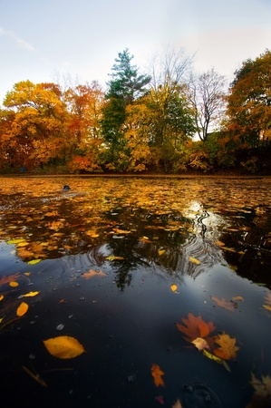 A beautiful autumn landscape with water and colorful trees. Stock Photo - 8774308