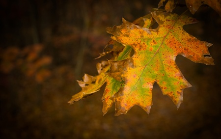 A dying orange leaf in autumn surrounded by brown brush. Stock Photo - 8774303