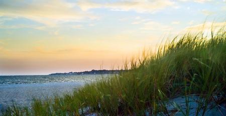 duna: Hierba de dunas en una playa soplando en el viento.