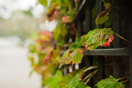 Decaying autumn leaves in the rain Stock Photo - 13930229