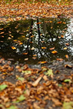 rain weather: Reflection in a large puddle of trees and old gravestones in autumn.