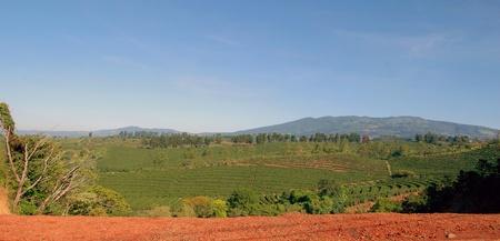 背景の山とコスタリカのコーヒー農園