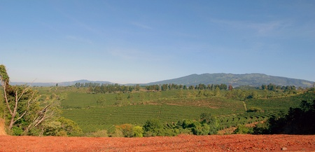plantations: A coffee plantation in Costa Rica with mountains in the background