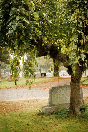 Tree and gravestone in an old cemetery during autumn  Stock Photo - 13805441