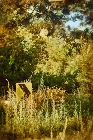 Right turn arror street sign in overgrown brush Stock Photo - 17898600