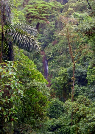 Gorgeous, lush, dense rainforest of Central America with a waterfall in the far distance. Stock Photo - 17898515