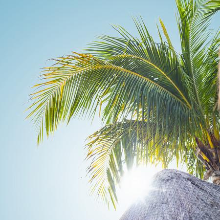 Sun shining through palm tree
