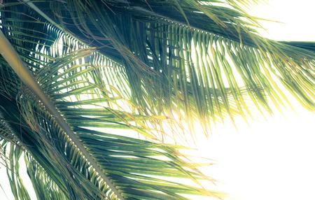palm: Vintage style palm tree