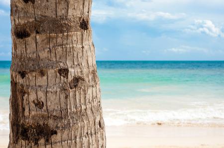 roo: Palm tree trunk Stock Photo