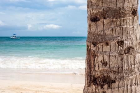 trunk  tree: Palma tronco de un �rbol Foto de archivo