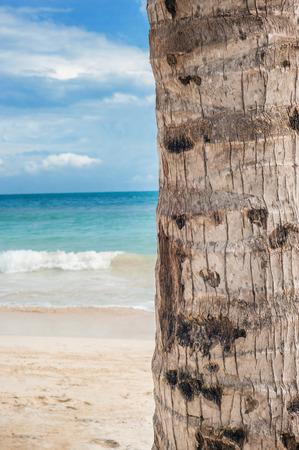 trunk  tree: