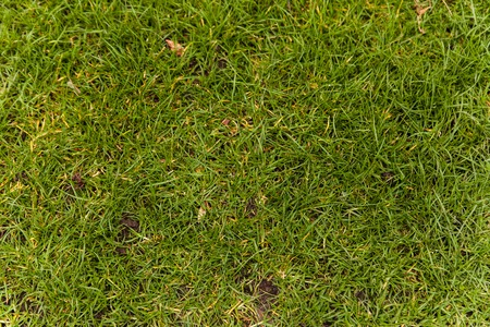 Natural Green grass texture. Perfect Golf or football field background. Top down up view, horizontal Stock Photo