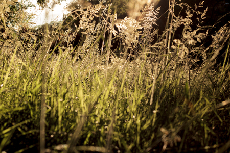 Ray of Light shines through the grass on a spring day in a meadow Stock Photo