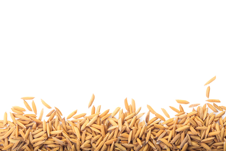grained: Yellow paddy jasmine rice isolated on white background with clipping path and copy space. Ready to use for website or poster. Stock Photo
