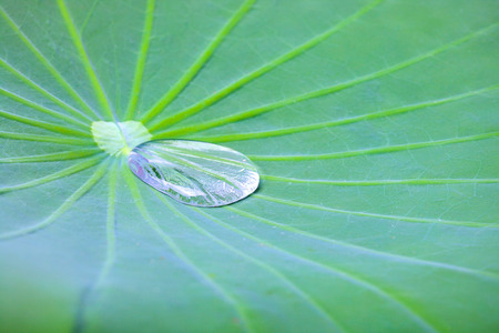 Kleine waterdruppeltjes op Lotus-bladachtergrond