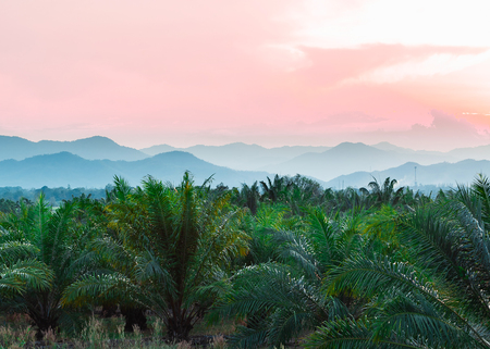 Tropical background of palm trees against mountain and twilight sky. Фото со стока - 105338141