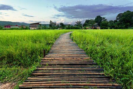Old brown wooden bridge beside green rice field in the evening/morning at Nakornnayok, Thailand Standard-Bild