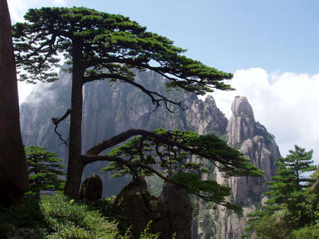 The pine of welcome visiter in Huangshan in China Stock Photo