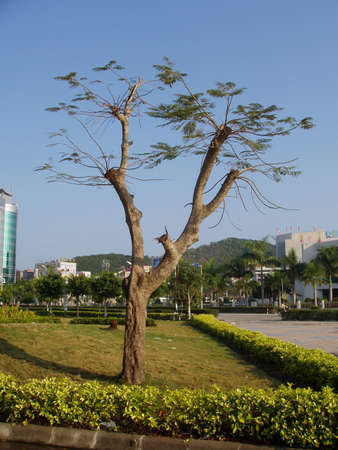 This is a tree int park of city of China. Stock Photo