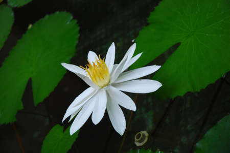 The flower in the south of China