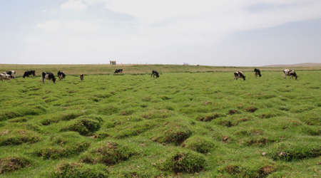 This is scenery of Neimonggu of China