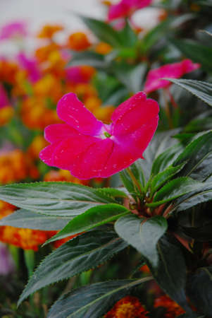admire: This is a flower in the south of China