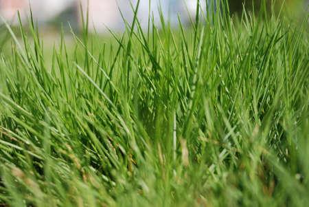 exuberance: The green grass in the sunlight