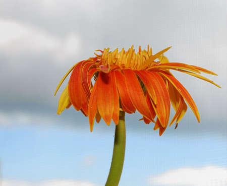 nervation: This is a flower in the south of China.