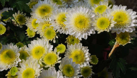 The beautiful flower is in the sunlight in the south of China.